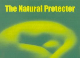 Natural progesterone protects prostate