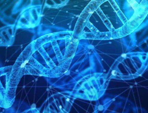 Prueba de ADN para determinar el código de barras