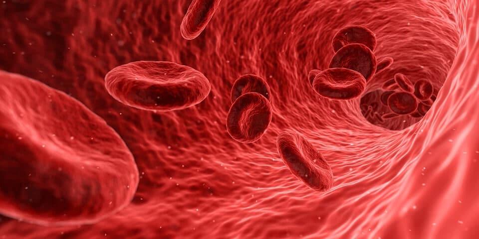¿Cuanto tarda en bajar la homocisteína?