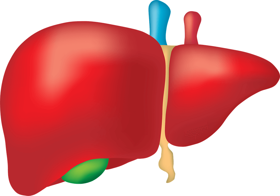 azufre-higado-bilis-saludable